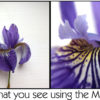 Before and after photos using a TRK macro lens